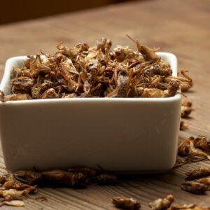 Džiovinti Svirpliai Džiovinti vabzdžiai Dried Crickets Dried Insects Getrocknete Heimchen Getrocknete Grillen Świerszcze suszone Owady suszone Сушёные сверчки Сушёные насекомые